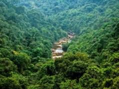 भारत में सबसे ज्यादा जंगल किस राज्य में हैं
