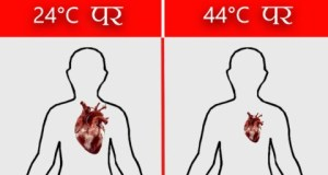 human body temperature