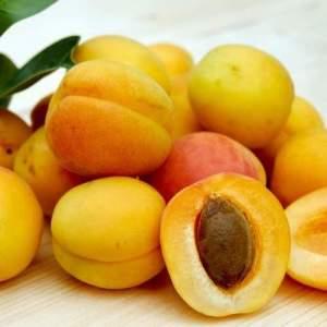 apricots 2523272 1920 850x500 1 500x500 1