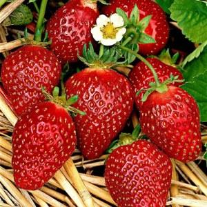 le fragole tutti i benefici di questo delizioso f 227882