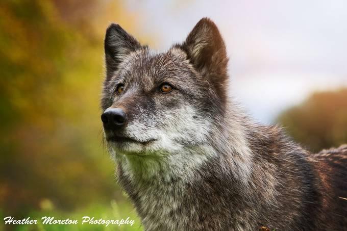 Dharma by heathermoreton - Celebrating Nature Photo Contest Vol 5