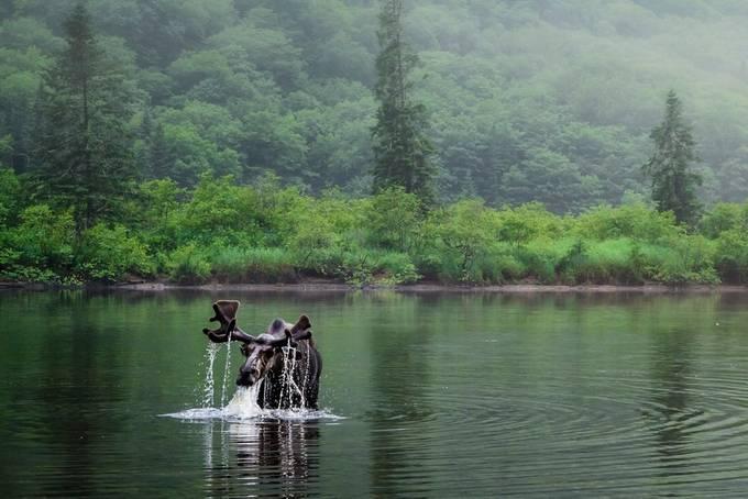 La rivière Jacques Cartier. by gaston - Celebrating Nature Photo Contest Vol 5