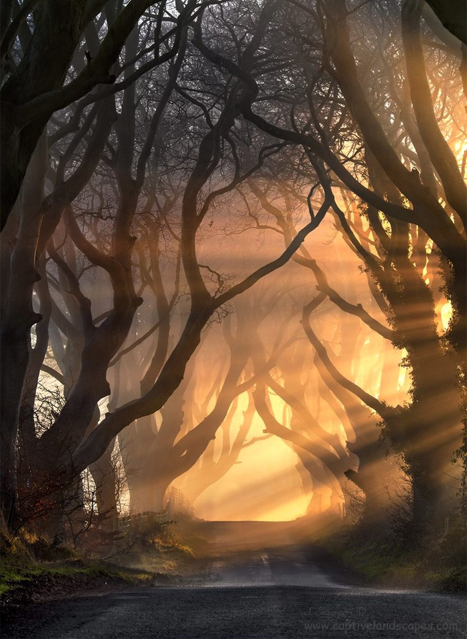 Hedges of Light by stephenemerson - The Wonders of the World Photo Contest