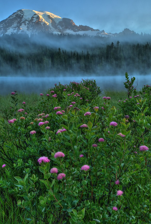 Mt Rainier pink by lmclain13 - Celebrating Nature Photo Contest Vol 5