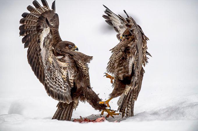 Polish winter wildlife by Birmo - Celebrating Nature Photo Contest Vol 5