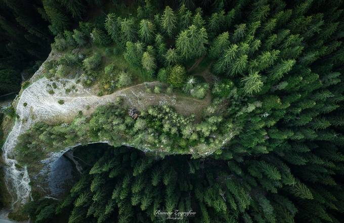 Forest by rumenzografov - The Wonders of the World Photo Contest