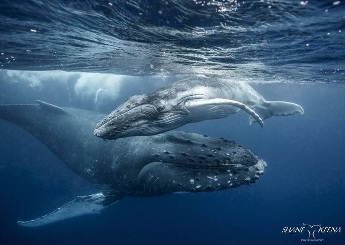 """""""Incoming!"""" by smkeena - The Wonders of the World Photo Contest"""