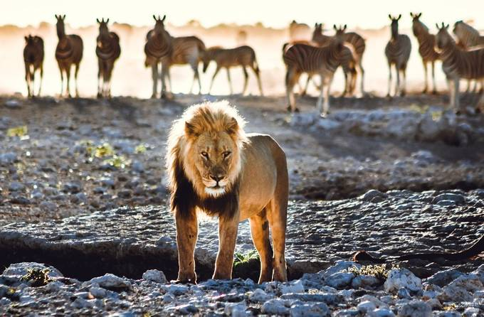 the King by bendikstalheim - Celebrating Nature Photo Contest Vol 5