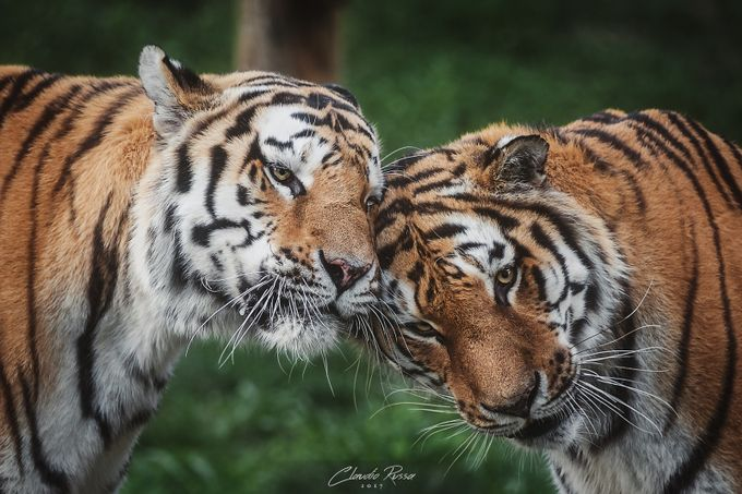 Brotherhood by claudiorussa - Celebrating Nature Photo Contest Vol 5