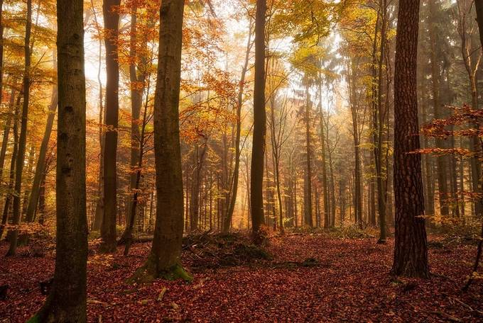autumn forest by pixelmac - Celebrating Nature Photo Contest Vol 5