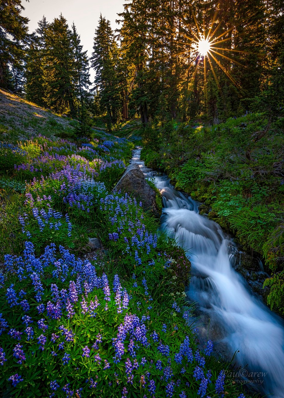 Soda Creek by paulcarew - The Wonders of the World Photo Contest