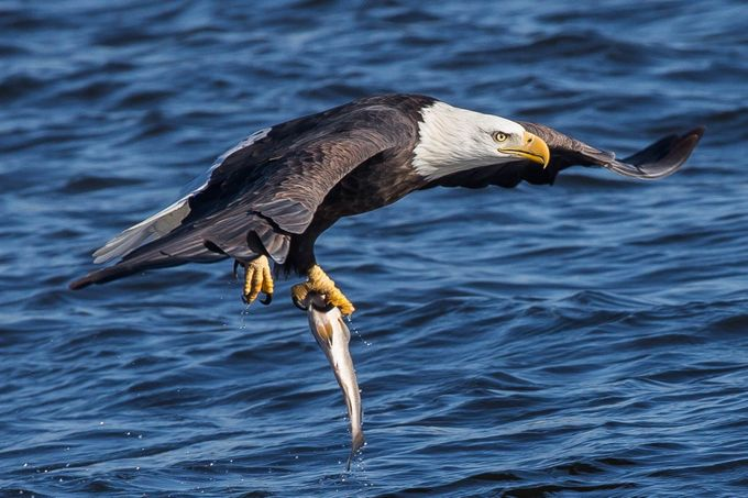 One-handed full grip hold by Mr_Spiff - Celebrating Nature Photo Contest Vol 5