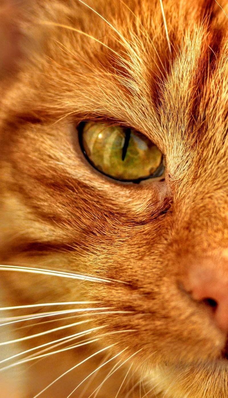 Ginger Stare by Roxy81 - Orange Tones Photo Contest