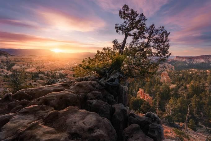 DESTINY UNBOUND by bpidala - Celebrating Nature Photo Contest Vol 5