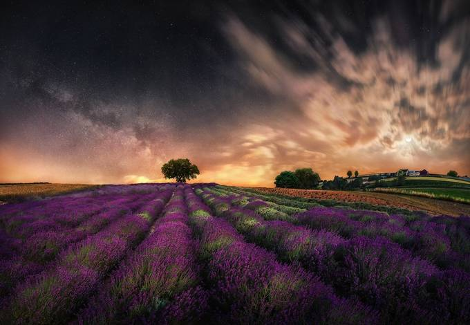 Milky way and half moon over lavender field by PatiAnna - The Wonders of the World Photo Contest