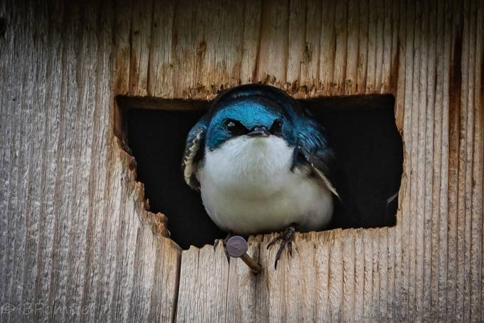 Bird in Montana by butchpomtier - The Blue Color Photo Contest 2018