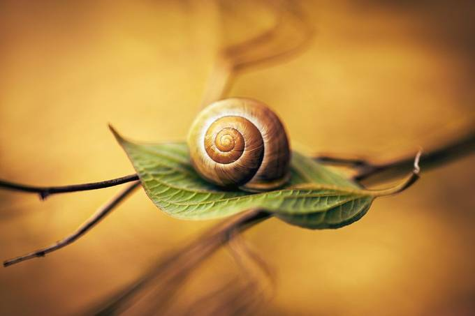 Shell by vincentnaze - Celebrating Nature Photo Contest Vol 5