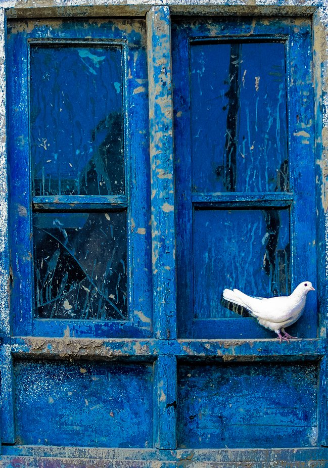 white Dove by nadirnaim - The Blue Color Photo Contest 2018