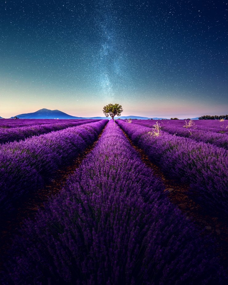 Lavender Field under the Milkyway during summer - Valensole, France @Grafixart_photo by Grafixartphoto - Image Of The Month Photo Contest Vol 37
