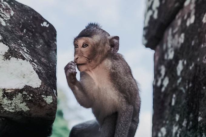 Monkey Business by theresahoffmann - Monthly Pro Photo Contest Vol 45