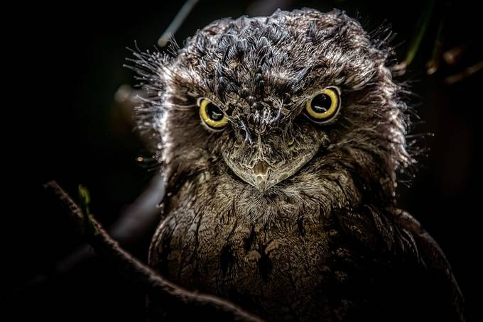 Stare by pauloperes - Monthly Pro Photo Contest Vol 45