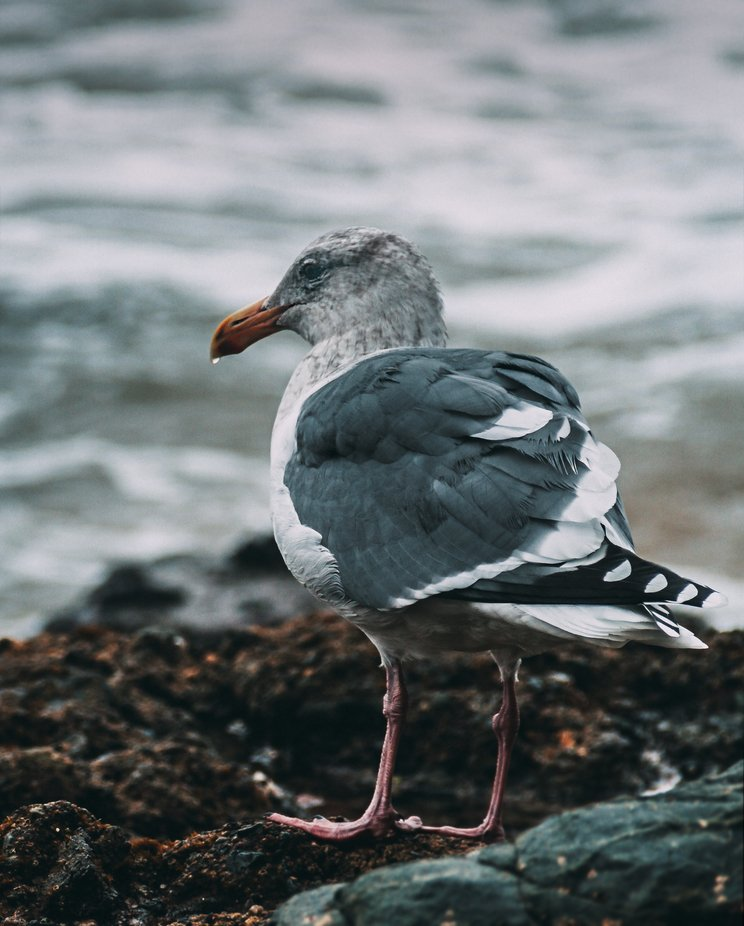 Seagull in the Mist v2 by seantredway - Shallow Depth Photo Contest