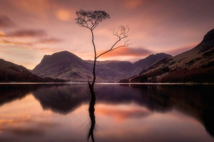 Buttermere Tree by michaelwalsh - Image Of The Month Photo Contest Vol 43
