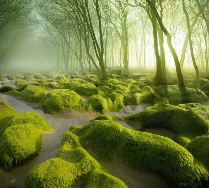 Moss Swamp by adrian-borda - My Best New Shot Photo Contest