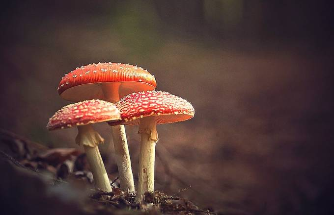Simply Red by guykrier - Shallow Depth Photo Contest