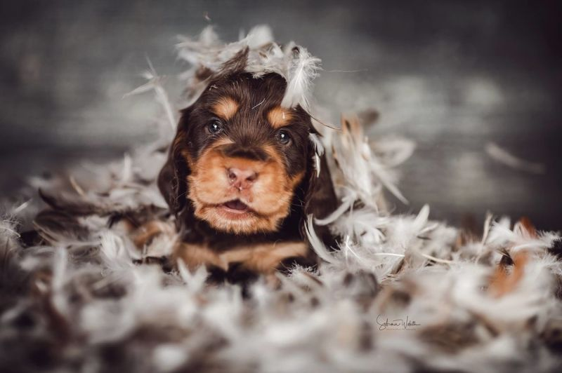 100 Images Of The Cutest Pets That Will Make You Smile
