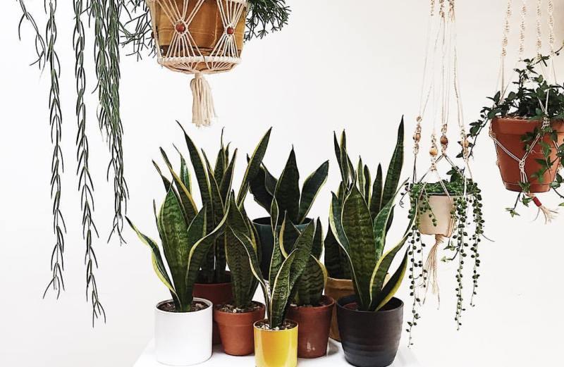 Το σπίτι των φυτών
