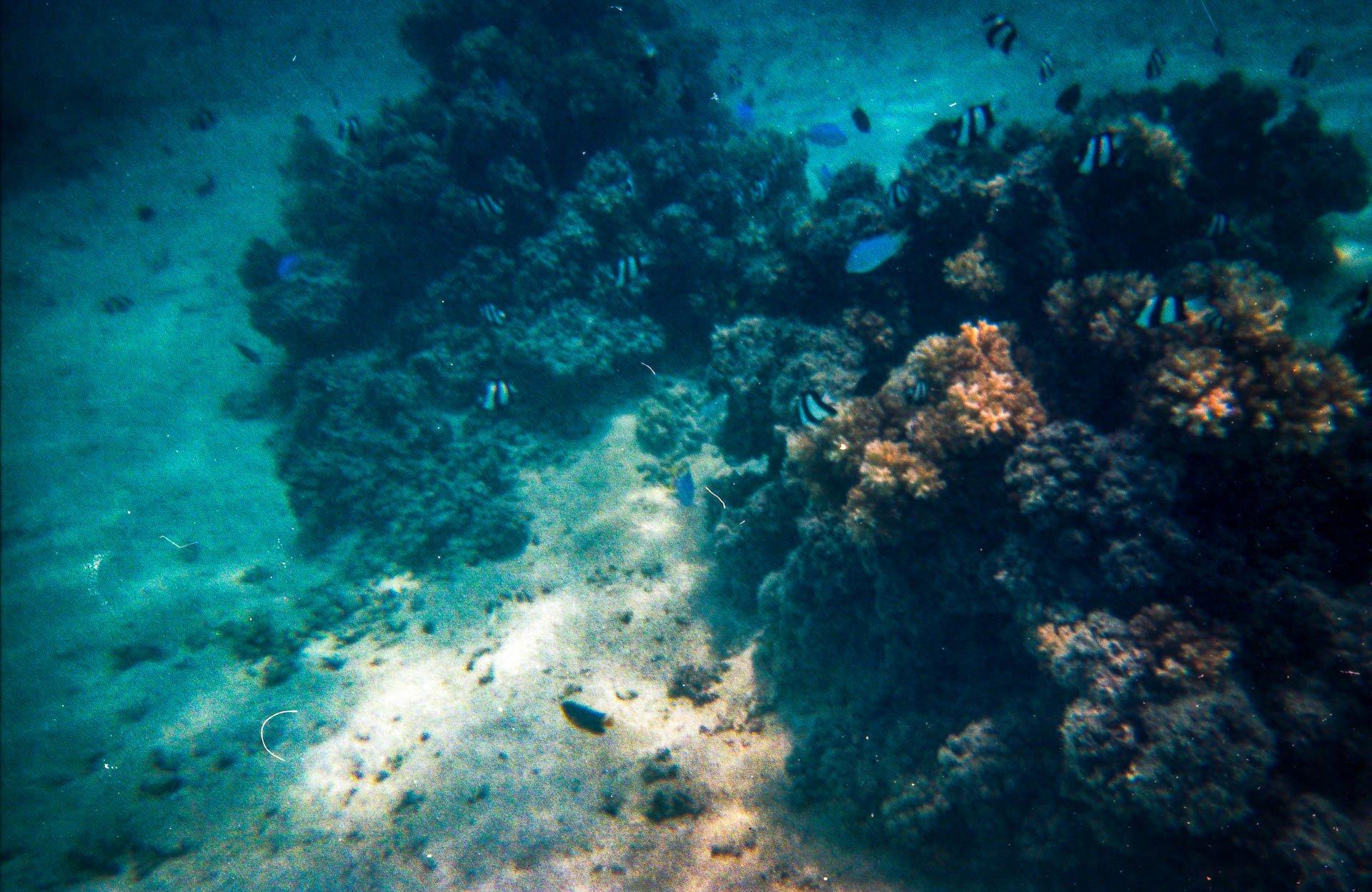 Schnorcheln im Pazifik