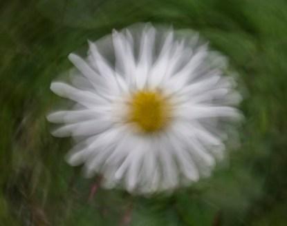 Spinning daisy
