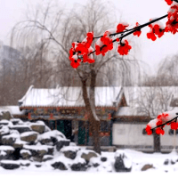 China's Unique Winter Plum Flowers