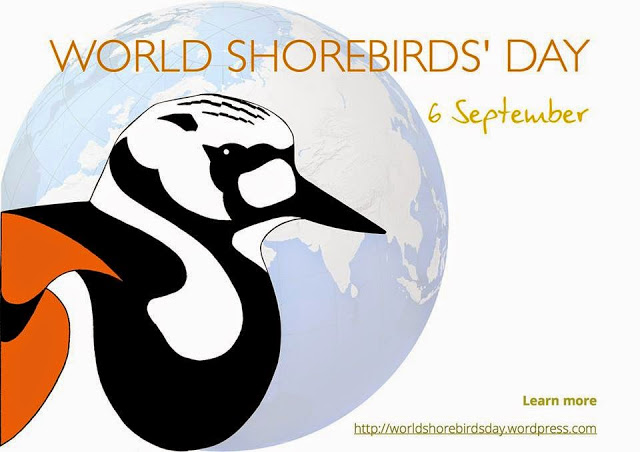 World Shorebird Day - Our Story