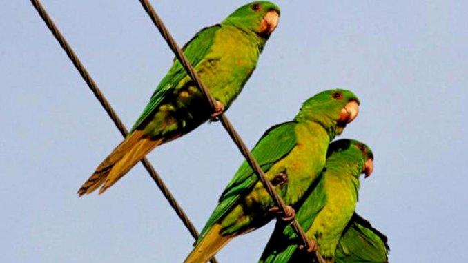 Πράσινα παπαγαλάκια