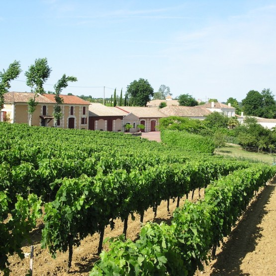vente château viticole bordeaux