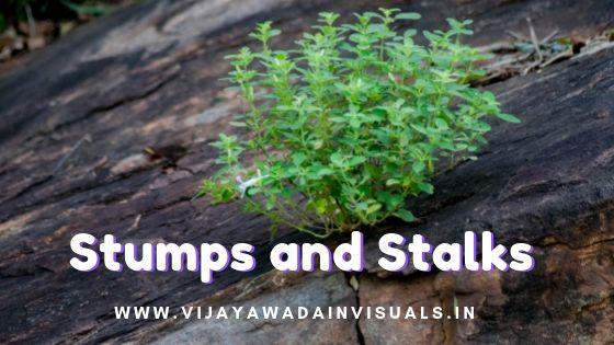 stumps