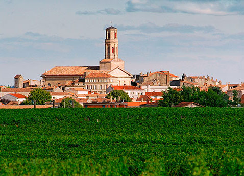 Pauillac Vineyards, France