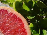 grapefruit Vilken diet passar dig?