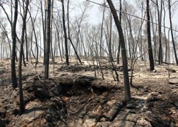 Campanya forestal