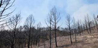 Jornades de prevenció d'incendis