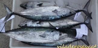 Productes del mar