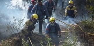 Campanya forestal 2013