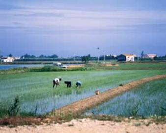 ajuts_agroalimentaris