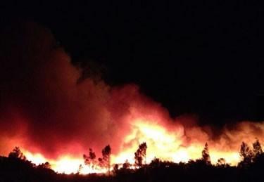 Foc forestal a Vilopriu