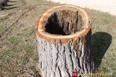 Tala d'arbres