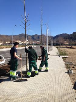 Plantació de nous arbres a Roses