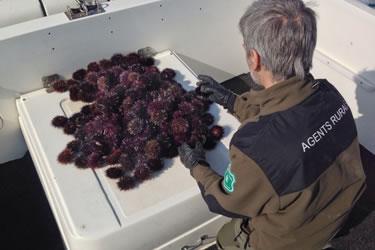 Agents Rurals i inspectors de Pesca
