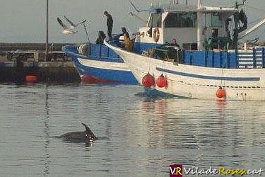 Dofí al port pesquer de Roses